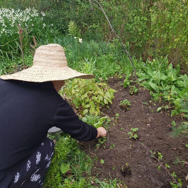 Plantation terminée