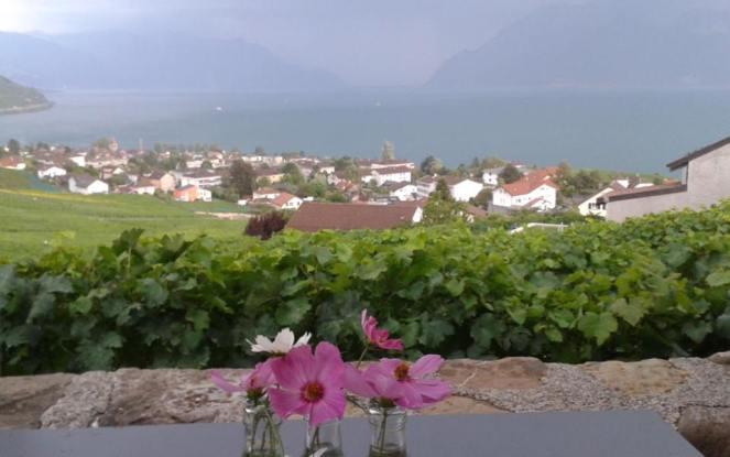 Lausanne Vignes