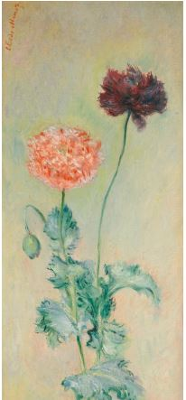 Pavots rouge et rose Claude Monet