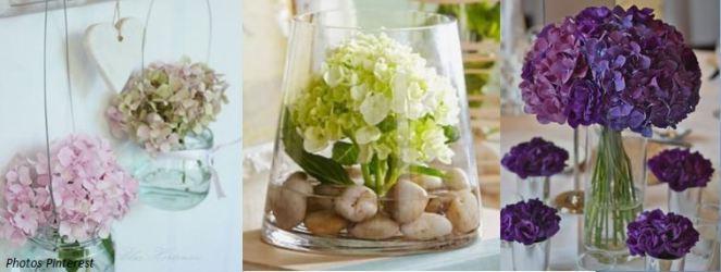 Hydrangea en vase