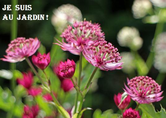 Je suis au jardin