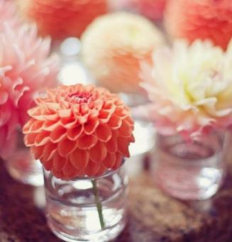 Bouquet de Dahlia Pinterest 2